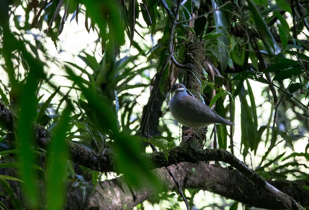 Gwada 2015 ~ Laforet Bois Colombes